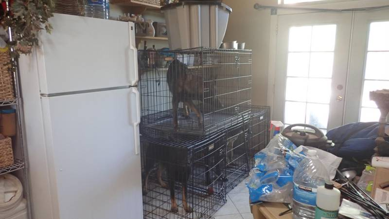 13 dogs were taken from a home off La Canada and Ina Road in July.