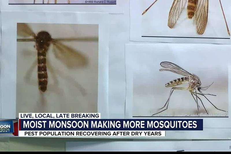 To help fight the bite, experts say you should wear deet bug spray during dawn and dusk and...
