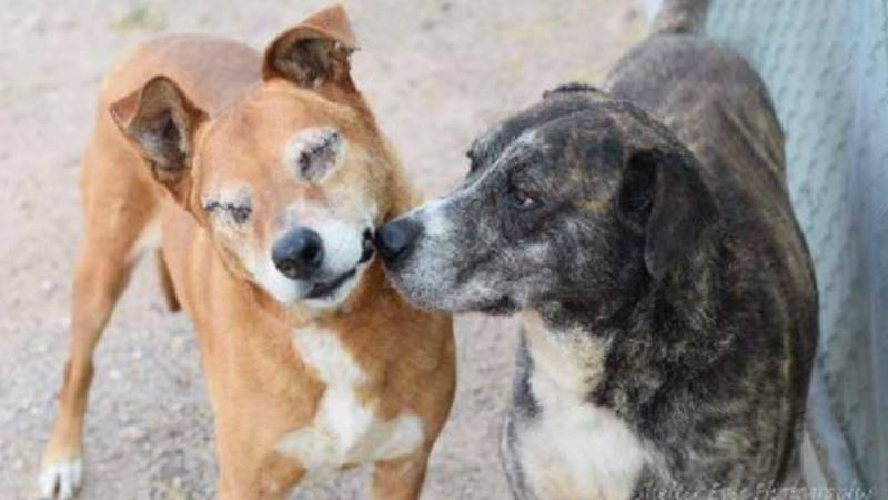 The Pima Animal Care Center is hosting a party to celebrate the community's efforts to make...