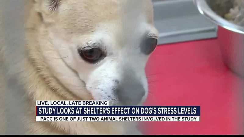 PACC shelter dogs participate in stress study