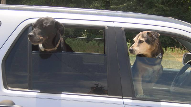 Responding to kids and pets in hot cars--when does the Good Samaritan Law come into play?