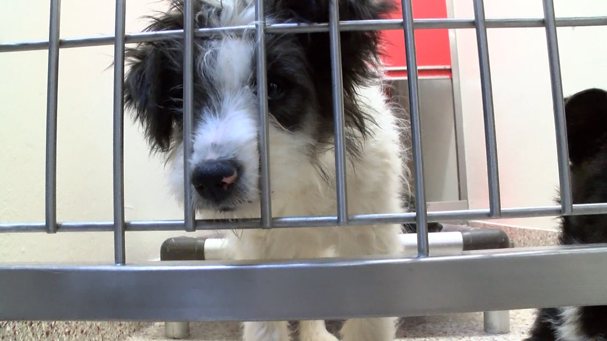 Stops people convicted of animal cruelty from having pets for at least five years