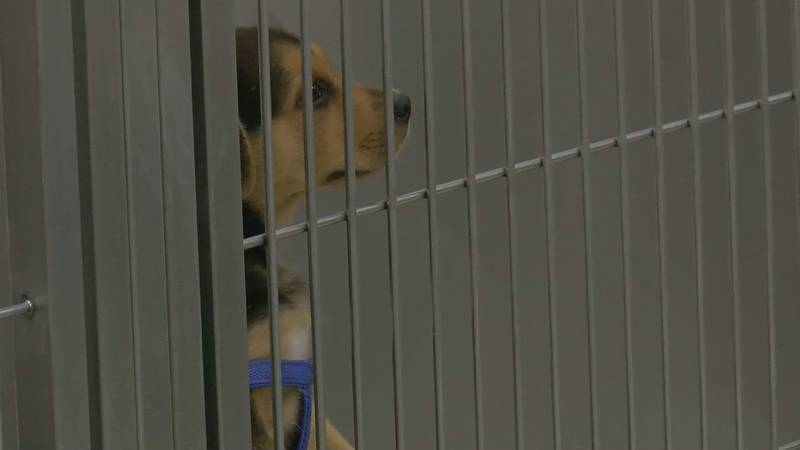 A puppy was among the emergency cases brought in over July 4th.