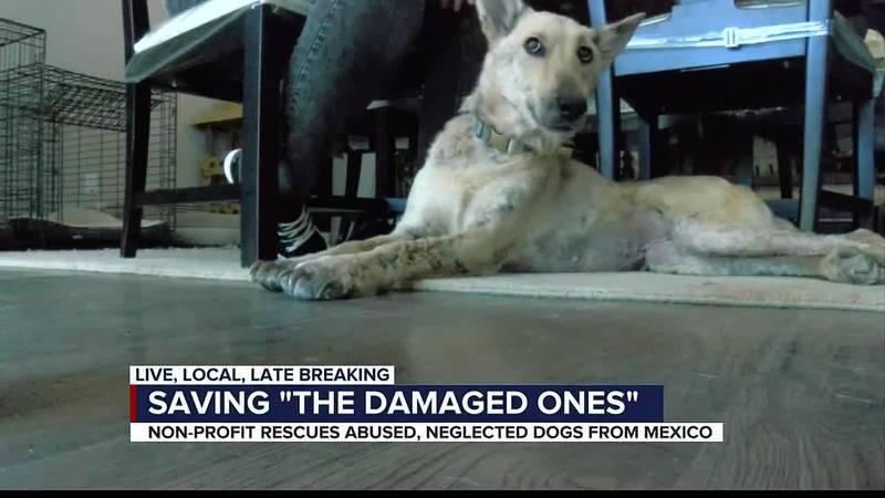 DAMAGED ONES ANIMAL RESCUE