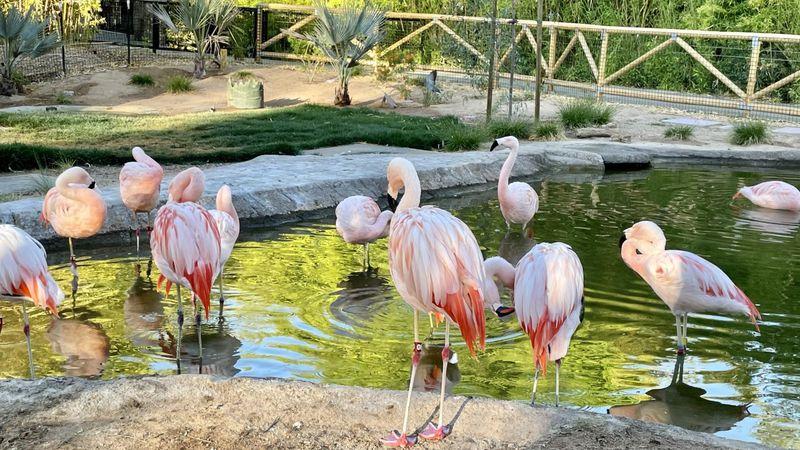 Reid Park Zoo tickled pink over new exhibit