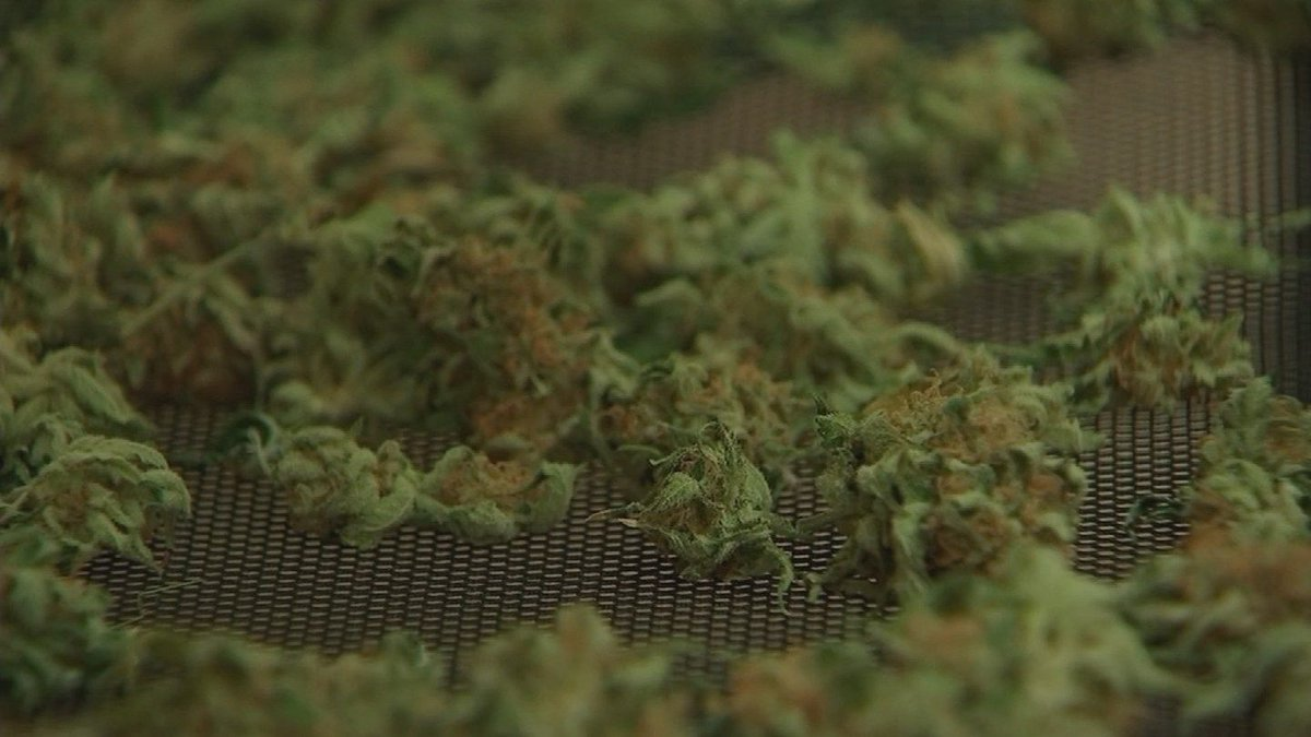 Starting July 12, Arizona residents can petition to have their marijuana convictions expunged.