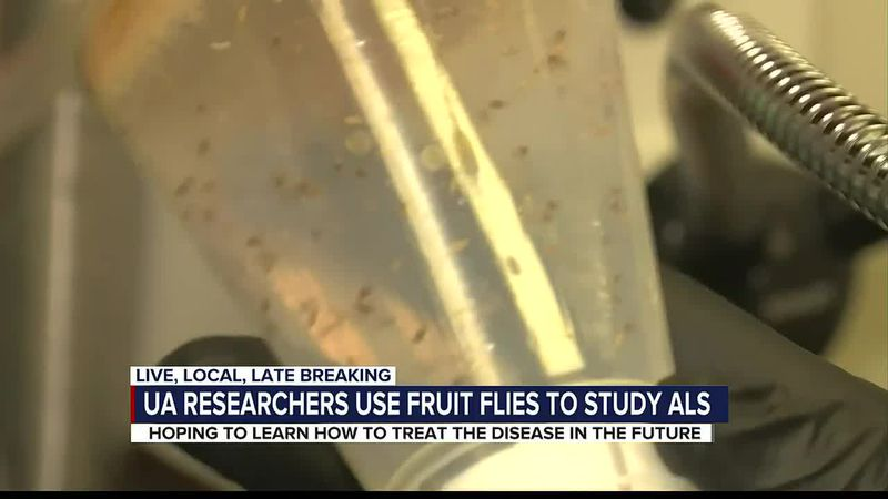 Fruit flies play a big role in UA team's research