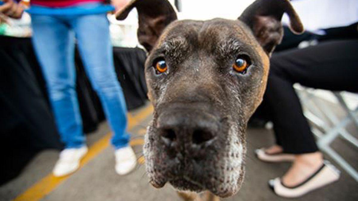 Pima Animal Care Center in Adopt Love. Adopt Local. (Source: Pima County)