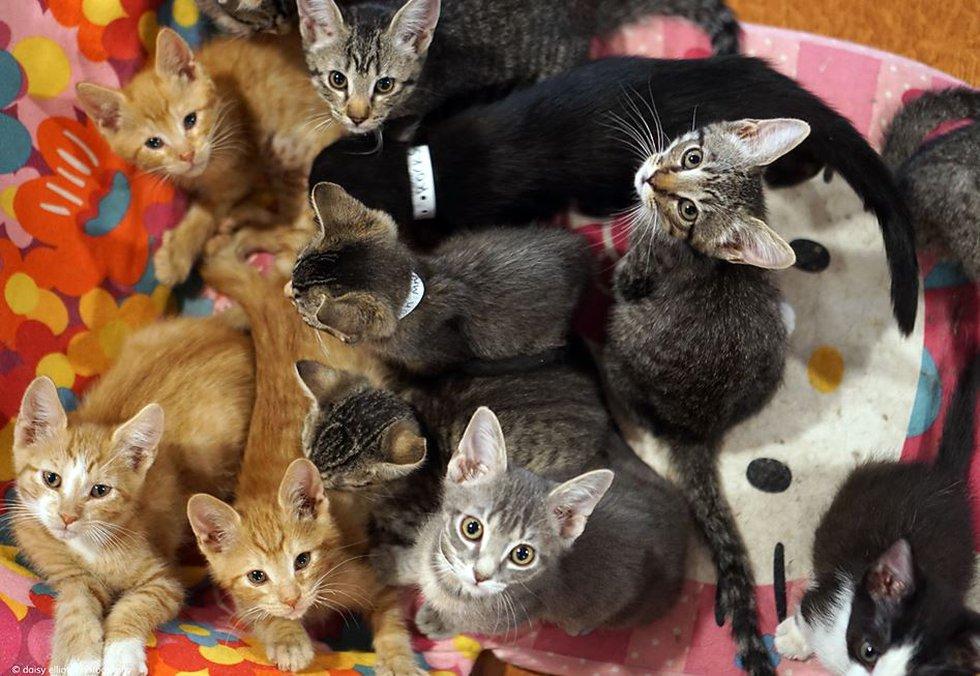 Group of cute kitties (Source: Hermitage No Kill Cat Shelter & Sanctuary/Daisy Elliott...