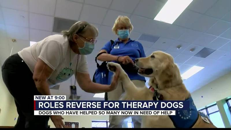 People therapy for therapy dogs