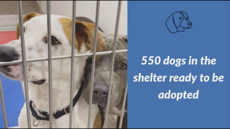 The Pima Animal Care Center has about 550 dogs ready to be adopted. There are roughly 700...