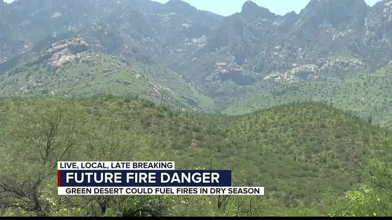 Vegetation growth from Monsoon 2021 could become fuel for wildfires