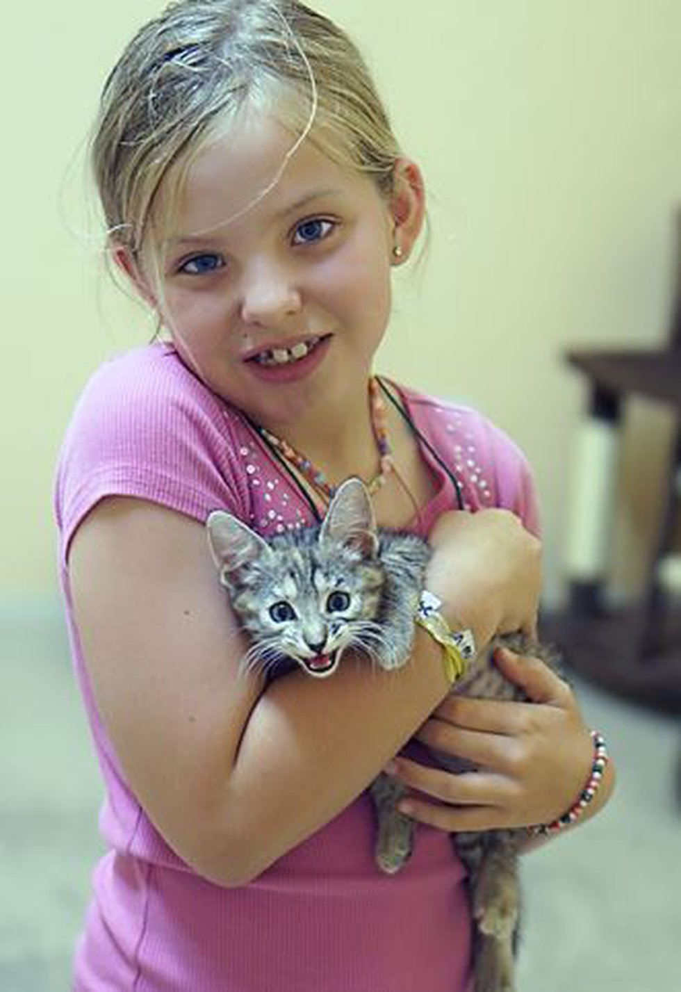 Camper and kitten (Source: The Hermitage No-Kill Cat Shelter & Sanctuary)
