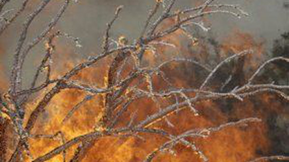 The Horton Fire, which started June 16, is about 20 miles southwest of Alpine, Arizona.