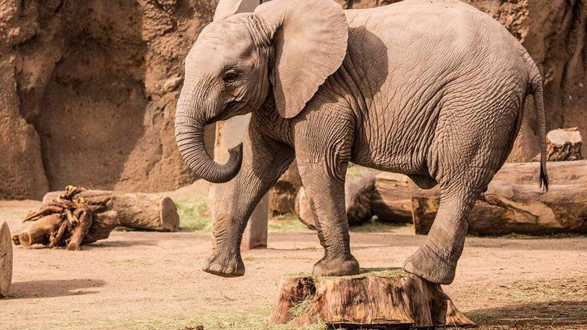 Nandi (Source: Reid Park Zoo)