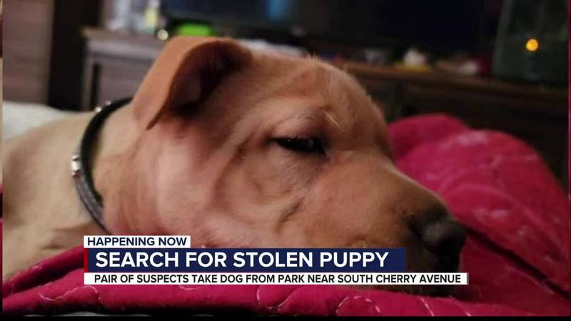 Search for stolen puppy