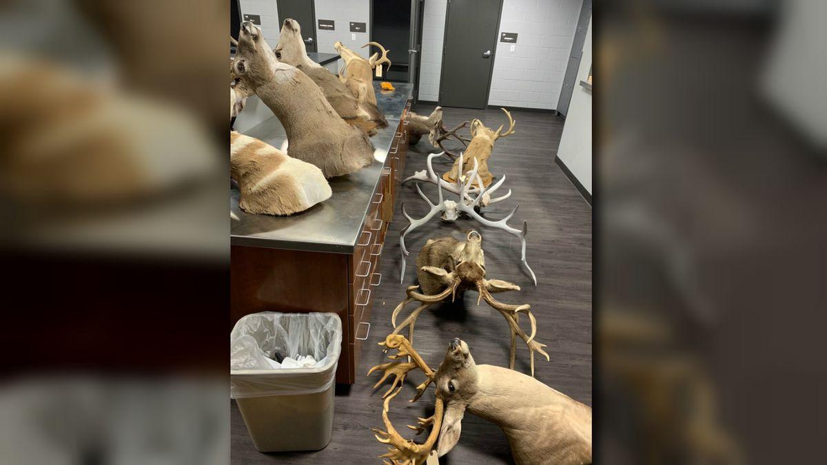 Oro Valley Police recover stolen taxidermy.