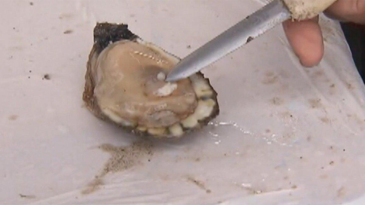 Oysters may be the culprit in several foodborne illnesses in Washington state.