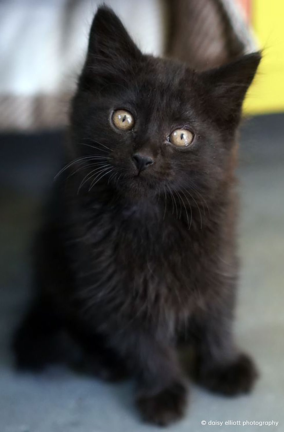 Cute kitty (Source: Hermitage No Kill Cat Shelter & Sanctuary/Daisy Elliott Photography)