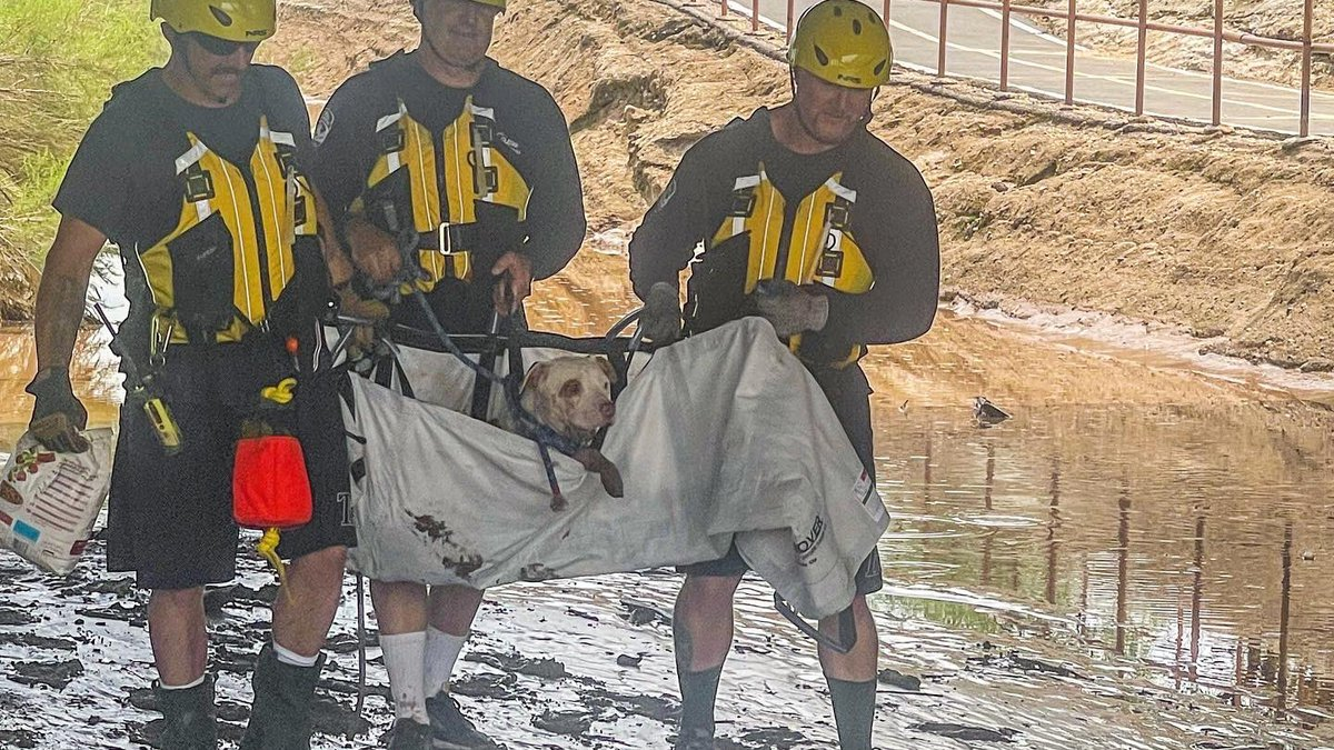 Crews from the Tucson Fire Department's Engine 20 saved an injured, pregnant dog from the...
