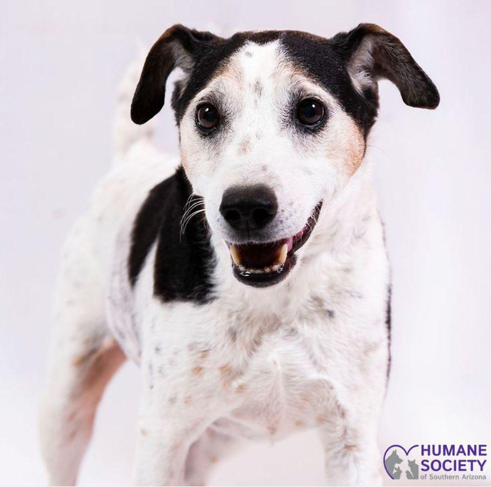 JULY 1 - BAUER (Source: Humane Society of Southern Arizona)