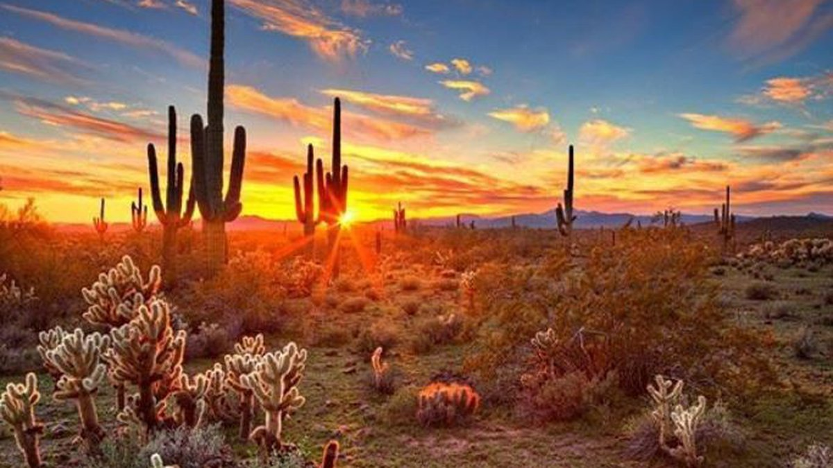 A celestial smackdown is brewing on social media and Saguaro National Park in Tucson is caught...