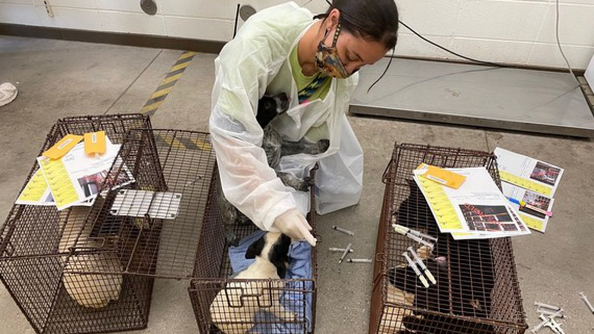 Pima Animal Care Center takes in 41 animals following APS welfare check