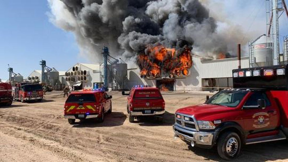 About 165K egg-laying hens are dead after a massive fire at the Hickman's Family Farm in...